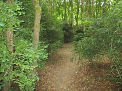 Peaceful woodland dog walk, Oxfordshire - Driving with Dogs