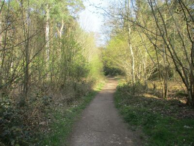 A148 Country Park dog walks near Holt, Norfolk - Driving with Dogs