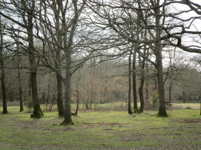 A22 Forest dog walks near Forest Row, East Sussex - Driving with Dogs