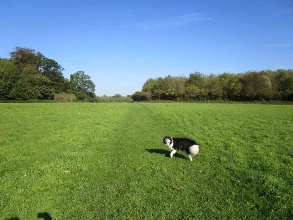 Jane Austen dog walk and dog-friendly pub, Kent - Kent dog-friendly dog walk and dog-friendly pub