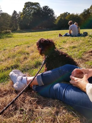 Richmond dog-friendly pub - The Roebuck, Surrey - Driving with Dogs