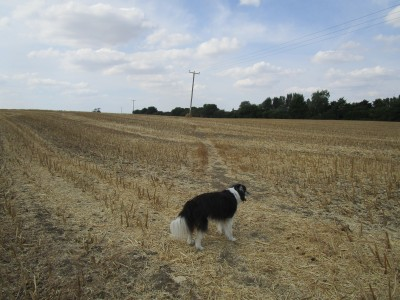 A5 dog walk and dog-friendly pub near Towcester, Northamptonshire - Driving with Dogs