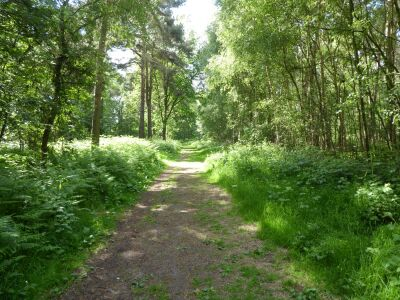 Woodland dog walk near Barmby Moor, East Yorkshire - Driving with Dogs