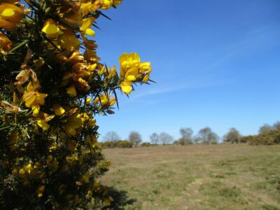 A149 A dog walk on the Heath, Norfolk - Driving with Dogs