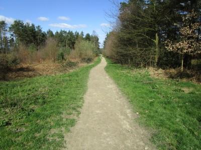 Hurt forest dog walk near Farley Heath, Surrey - Driving with Dogs