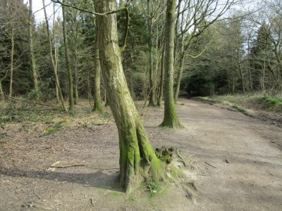 A22 woodland dog walk, East Sussex - Driving with Dogs