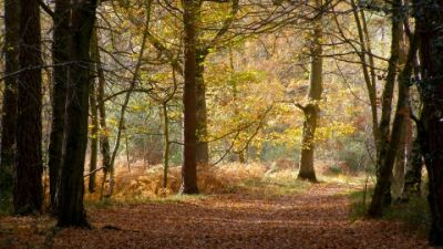 A340 dog walk near Basingstoke, Hampshire - Driving with Dogs