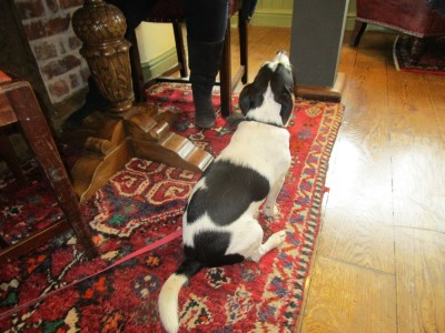 A25 dog-friendly pub near Reigate, Surrey - Driving with Dogs
