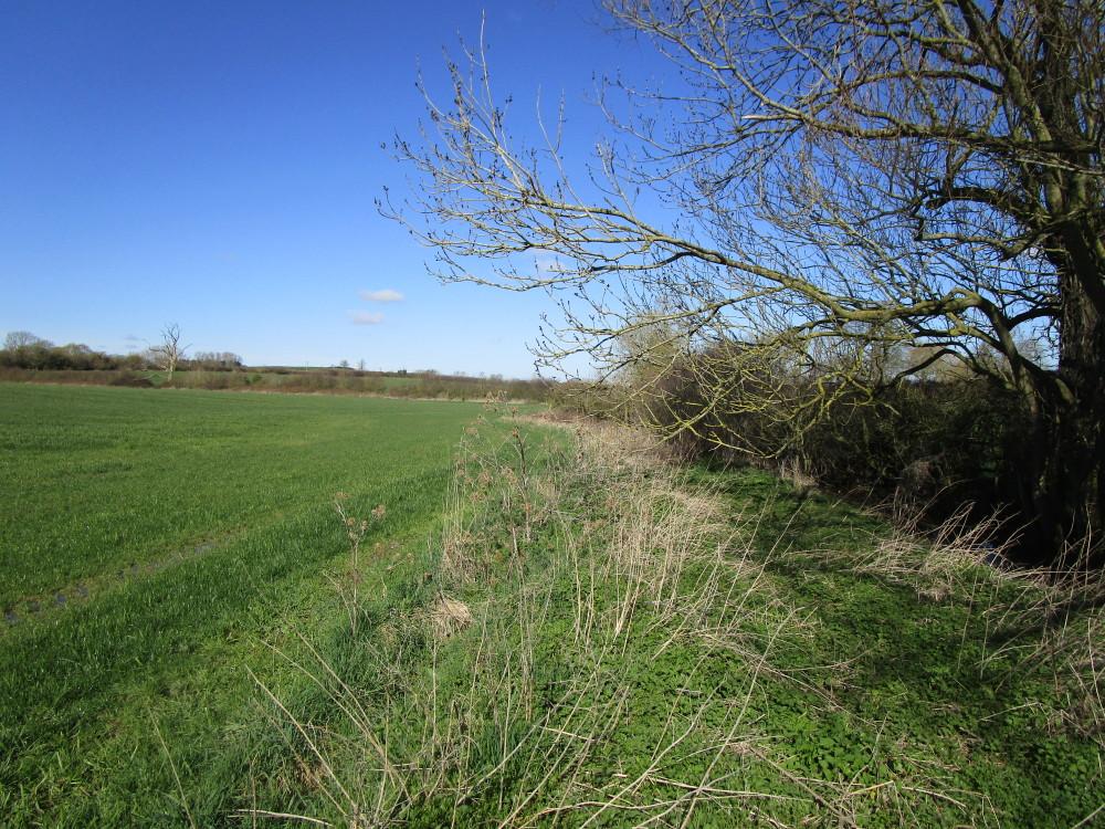 A429 near Shipston dog walk and dog-friendly pub, Warwickshire - Dog walks in Warwickshire