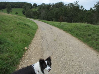 Gentle Cotswold dog walk, Gloucestershire - Driving with Dogs