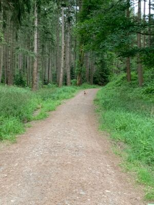 Dog Walk on river Eden and Coombs Wood, Cumbria - Driving with Dogs