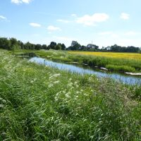 Quiet canalside dog walk near Pocklington, East Riding of Yorkshire - Dog walks in Yorkshire with swimming