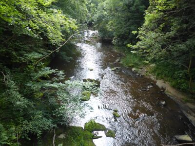 A691 River Derwent dog walk and swimming near Consett, County Durham - Driving with Dogs