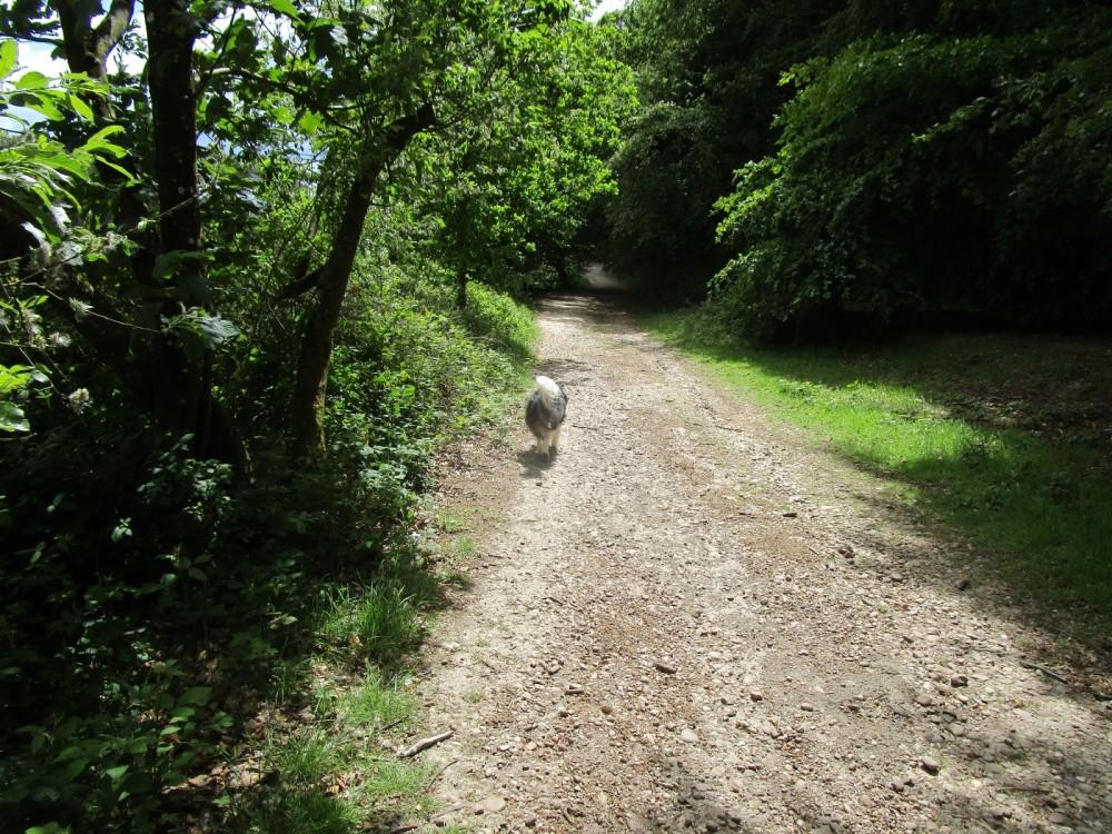 Dog walk in ancient footsteps, Devon - Devon dog-walking places.JPG