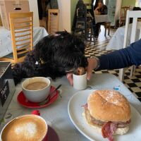 Henry's cafe - dog-friendly, Cheshire - 85B32770-20B7-4527-851D-F26BF4809296.jpeg