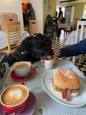 Henry's cafe - dog-friendly, Cheshire - Driving with Dogs