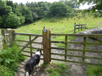 A171 hidden walks and pub near Scarborough, North Yorkshire - Driving with Dogs