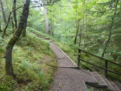 A68 Forest dog walk with waterfalls near Kielder, Northumberland - Driving with Dogs