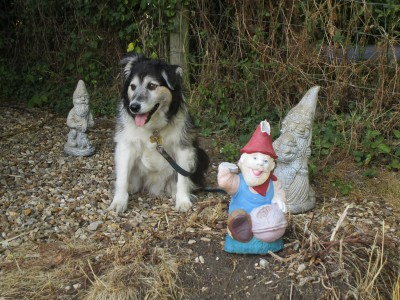 A47 dog-friendly pub and dog walk, Leicestershire - Driving with Dogs