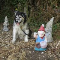 A47 dog-friendly pub and dog walk, Leicestershire - Dog walk and dog-friendly pub in Leicestershire