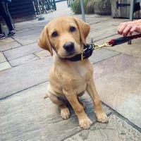 Colne Valley dog-friendly pub, Essex - Essex dog-friendly pub and dog walk