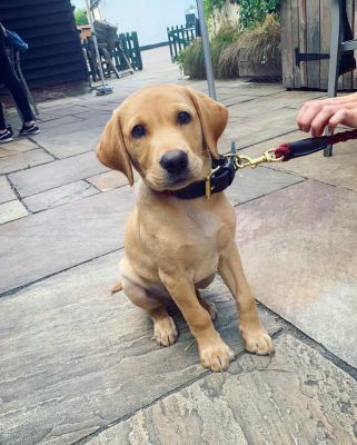 Colne Valley dog-friendly pub, Essex - Driving with Dogs