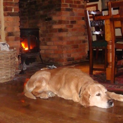 Dog-friendly dining near the A21, Kent - Driving with Dogs