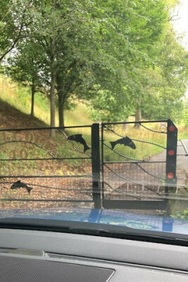 Rickerby Park dog walk - Carlisle, Cumbria - Driving with Dogs