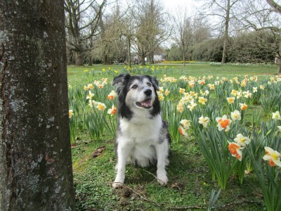 A246 Edwardian splendour and a dog walk, Surrey - Driving with Dogs