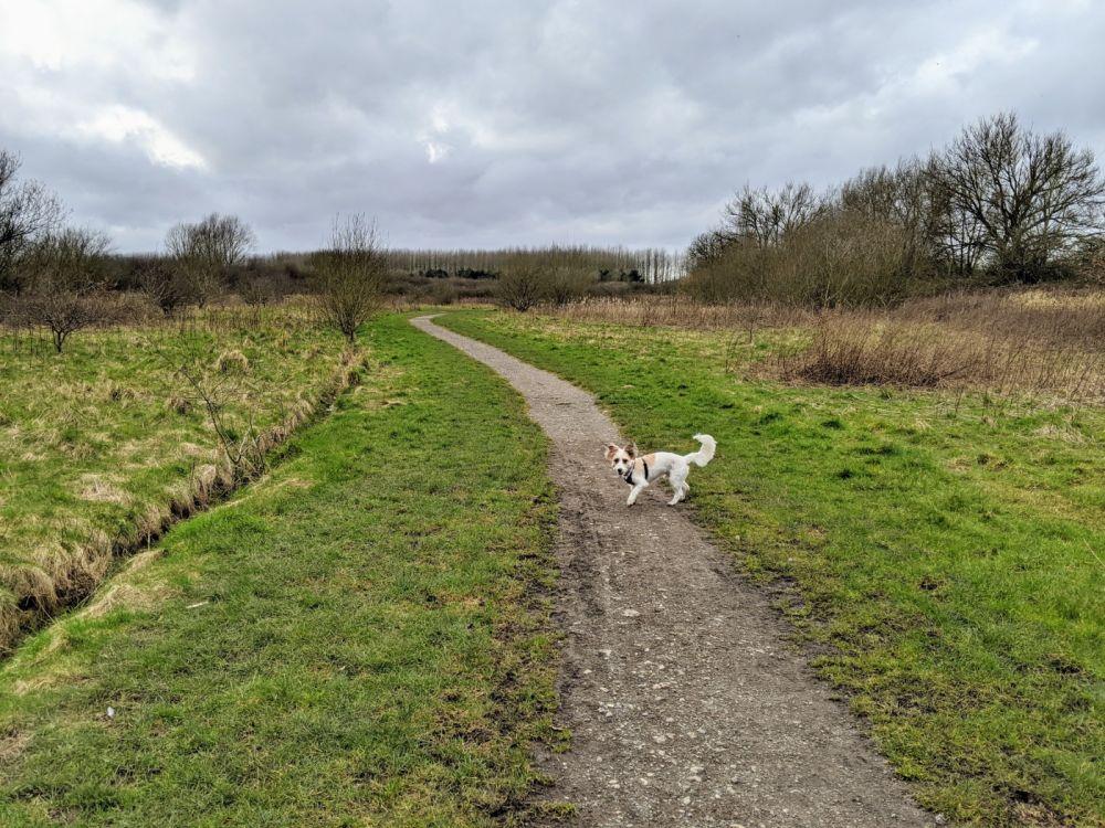 Local Dog Walk: Wheatacre Woods, Lancashire - IMG_20200307_141938.jpg