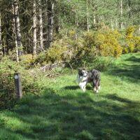 A dog walk in the Forest near Dunwich, Suffolk - A dog walk in the forest Suffolk
