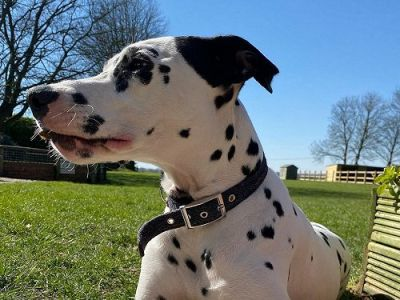 M4 dog-friendly pub and dog walk near Swindon, Wiltshire - Driving with Dogs