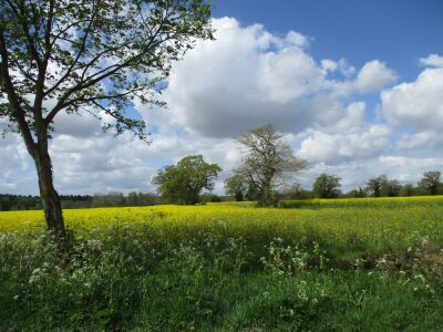 Dog-friendly country pub and walk near the A14, Suffolk - Driving with Dogs