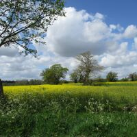Dog-friendly country pub and walk near the A14, Suffolk - Suffolk dog-friendly pubs with dog walks