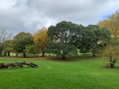 Saltram 3.jpeg - Driving with Dogs