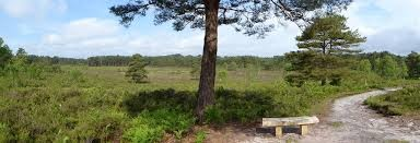 A31 country park dog walk and cafe near Bournemouth, Dorset - Driving with Dogs