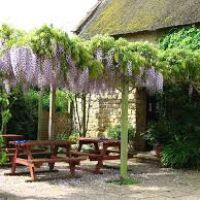 A303 dog-friendly refreshments and dog walk near Ilminster, Somerset