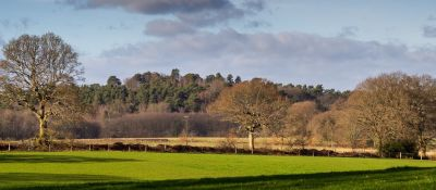 A286 dog walk near Godalming, Surrey - Driving with Dogs