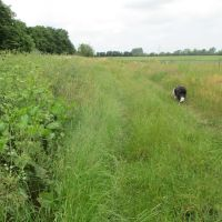 Riverside dog-friendly pub and dog walk, Oxfordshire - dog-friendly pub and dog walk Oxfordshire.JPG