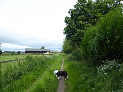 Dog walk and dog-friendly refreshments near the A19, North Yorkshire - Driving with Dogs
