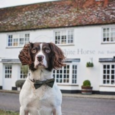 South Downs dog walk and dog-friendly inn, West Sussex - Driving with Dogs