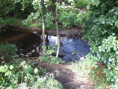 A689 Wolsingham dog walk and waterside picnic, Durham - Driving with Dogs