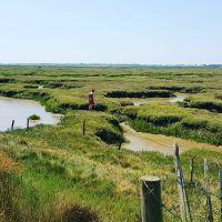 Stunning marshland dog walk and dog-friendly pub nearby, Essex - Dog walks in Essex.jpg