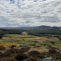 Borlum Circuit - a wonderful walk with the dog, Scotland - Borlum 1.jpg