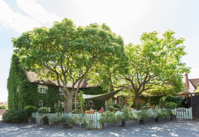 A12 heritage village with dog walk and pub, Suffolk - Driving with Dogs