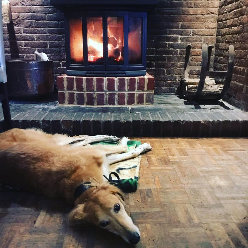 Dog-friendly inn on the A12 near Woodbridge, Suffolk - Suffolk dog-friendly pub and dog walk