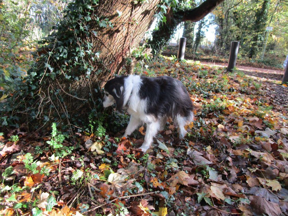 A329 dog walk and dog friendly pub near Pangbourne, Berkshire - Berkshire dog-friendly pub and dog walk