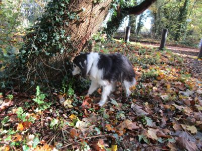 A329 dog walk and dog friendly pub near Pangbourne, Berkshire - Driving with Dogs