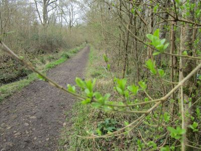Woodland dog walk in the Colne Valley, Essex - Driving with Dogs