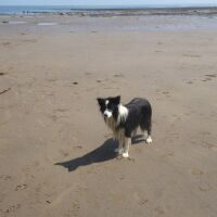 A171 Boggle Hole dog walk and cafe, North Yorkshire - North Yorkshire dog-friendly beach